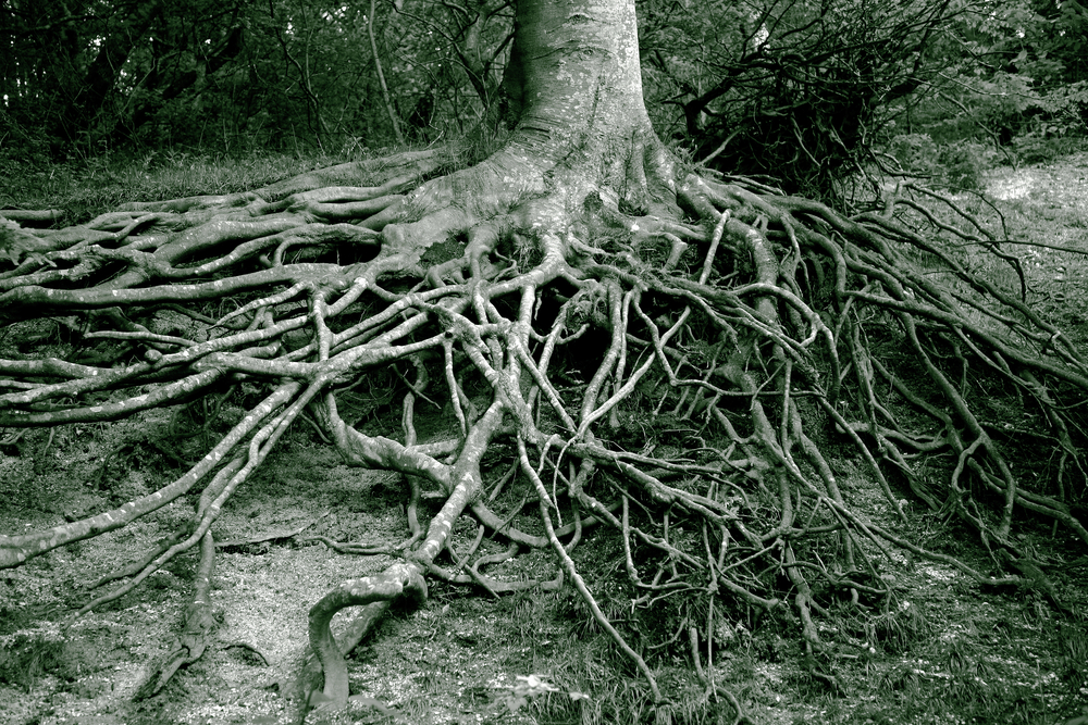 Bitterness Roots   (baggage)